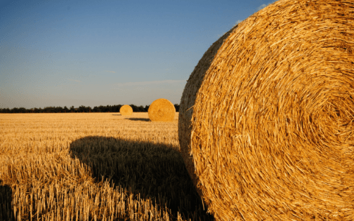 Inheritance Tax – Business Property Relief and Agricultural Property Relief